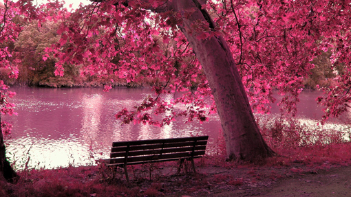 Розовые обои