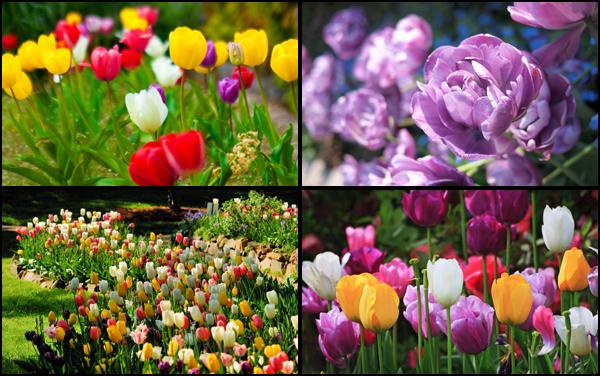 Картинки красивые поля цветов